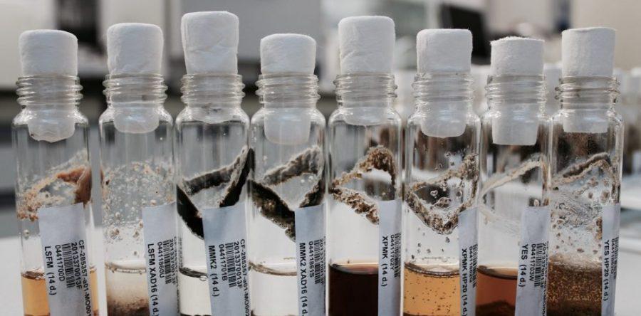 Microbiología y Fermentación